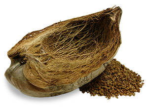 coconut husk and its fragments
