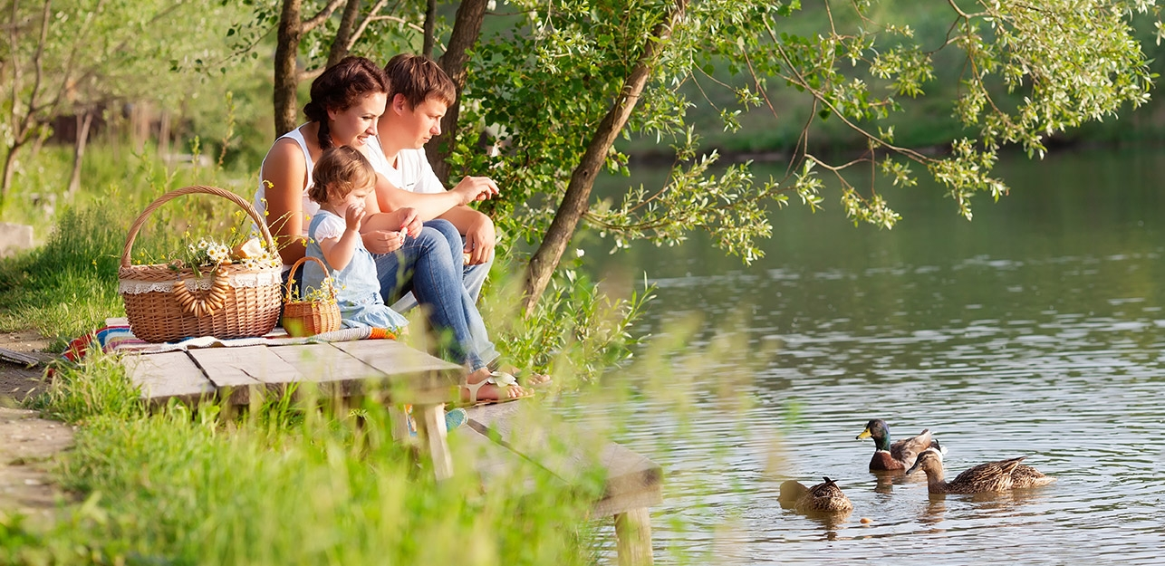 Young parents and their daughter having a picnic and feeding ducks on the green shore of a river or lake.